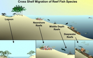 Artificial Reef Management Plan Update for Martin County