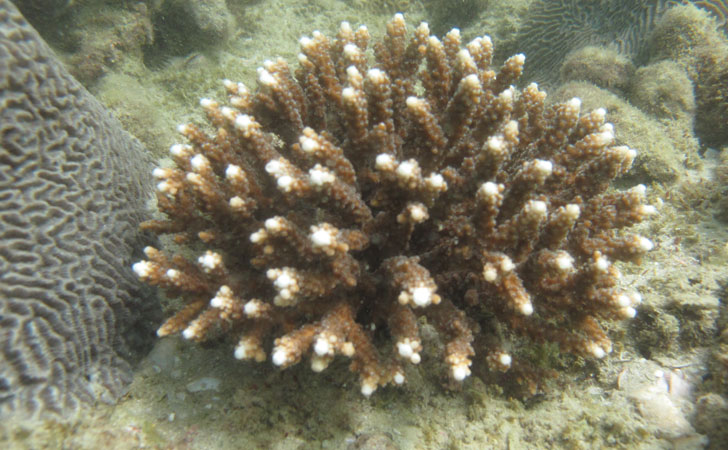 2547-Coral-Translocation.jpg